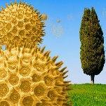 Végétation en avance, pollens et allergies