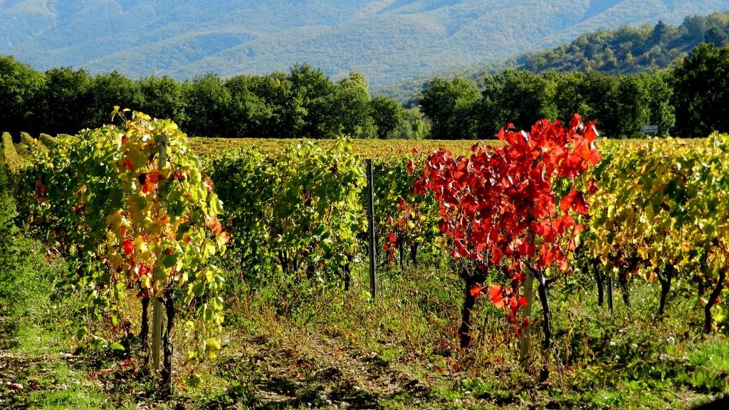 Photos m t o sur montpellier le premier site m t o pour montpellier - L automne et ses couleurs ...
